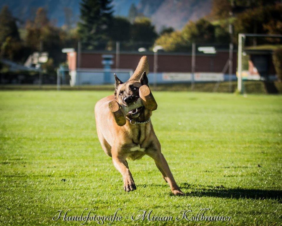Hundeshooting.ch